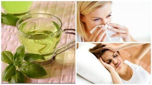 8 преимуществ чая с базиликом