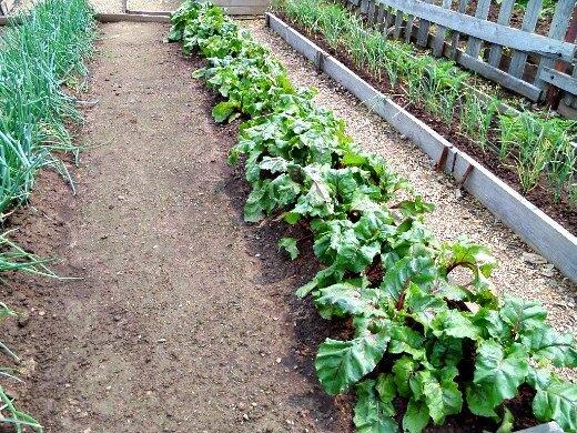 Моя простая, но эффективная методика против сорняков в саду и огороде